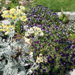giardino-della-felicita-cidas