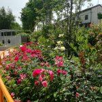 giardino-della-felicita-cidas2
