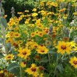 giardino-della-felicita-cidas3