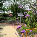 giardino-della-felicita-cidas7