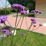 giardino-della-felicita-cidas8